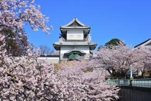 北陸金沢城 石川櫓と桜に快晴の空の写真素材 [FYI04833951]