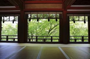 新緑の談山神社の写真素材 [FYI04833957]