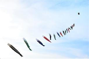 青空を泳ぐ鯉のぼりの写真素材 [FYI04833968]