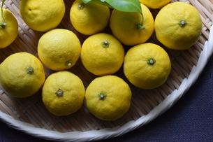 大阪府・能勢町産の柚子の写真素材 [FYI04834034]