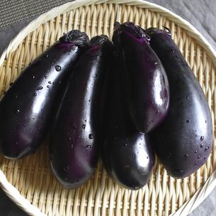 京都・上賀茂産の茄子の写真素材 [FYI04834040]