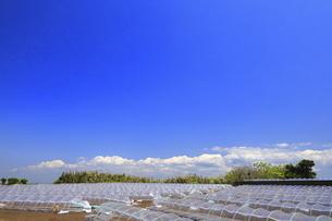 神奈川県 三浦半島の温室栽培の写真素材 [FYI04834104]