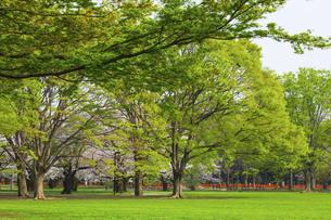 春の代々木公園の写真素材 [FYI04834368]
