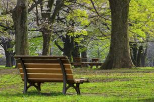 桜咲く春の代々木公園の写真素材 [FYI04834370]
