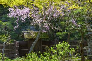 桜咲く春の東慶寺の写真素材 [FYI04834381]
