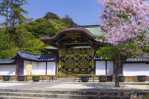 桜咲く春の建長寺・唐門の写真素材 [FYI04834386]