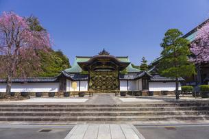桜咲く春の建長寺・唐門の写真素材 [FYI04834387]