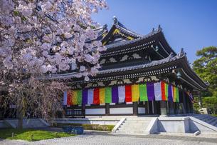 桜咲く春の長谷寺の写真素材 [FYI04834392]