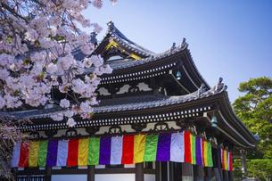 桜咲く春の長谷寺の写真素材 [FYI04834393]
