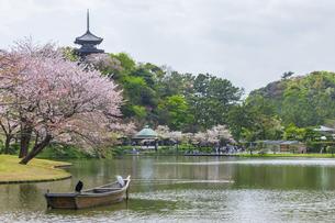 春霞の桜咲く三渓園の写真素材 [FYI04834397]