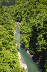 新緑の小安峡の写真素材 [FYI04834471]