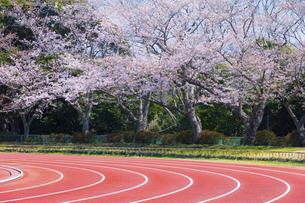 桜咲く春の陸上競技場の写真素材 [FYI04834556]