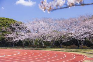 桜咲く春の陸上競技場の写真素材 [FYI04834557]