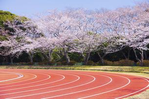 桜咲く春の陸上競技場の写真素材 [FYI04834558]