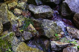 湧き水の写真素材 [FYI04834588]
