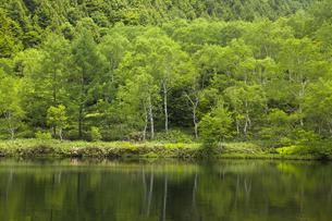 木戸池の写真素材 [FYI04834791]