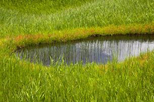 月山 弥陀ヶ原の池塘の写真素材 [FYI04834796]
