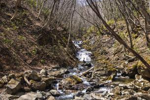 安達太良山 あだたら渓谷自然遊歩道の写真素材 [FYI04834851]