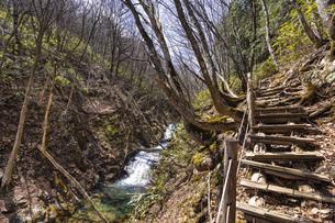 安達太良山 魚止滝の写真素材 [FYI04834852]