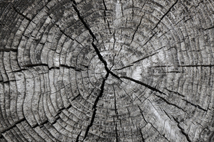 古い木の切り株の写真素材 [FYI04834920]