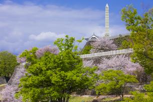 桜咲く春の舞鶴城公園の写真素材 [FYI04834941]