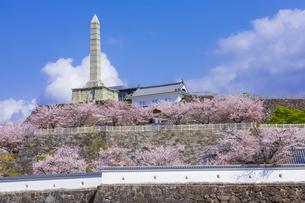 桜咲く春の舞鶴城公園の写真素材 [FYI04834942]