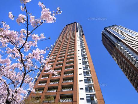 桜の花と六本木ヒルズレジデンスの写真素材 [FYI04835029]