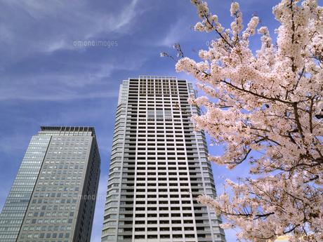 桜が満開の錦糸公園 東京都の写真素材 [FYI04835098]