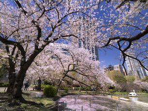 満開の桜と不忍池 東京都上野公園の写真素材 [FYI04835130]