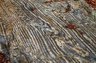 【地学教材】12月 褶曲構造 -足尾山地のチャート層の例の写真素材 [FYI04835568]