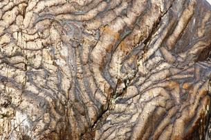 【地学教材】12月 褶曲構造 -足尾山地のチャート層の例の写真素材 [FYI04835571]