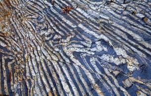 【地学教材】12月 褶曲構造 -足尾山地のチャート層の例の写真素材 [FYI04835572]
