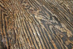 【地学教材】12月 褶曲構造 -足尾山地のチャート層の例の写真素材 [FYI04835723]