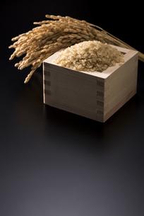 稲穂と米の写真素材 [FYI04835761]