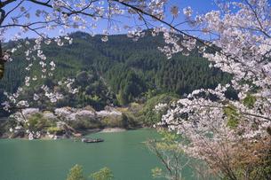 桜咲く市房ダムの写真素材 [FYI04836037]
