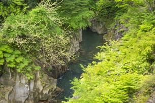 春の長田峡の写真素材 [FYI04836049]