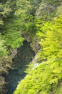 春の長田峡の写真素材 [FYI04836050]
