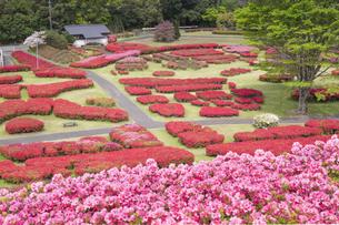 ツツジ咲く椎八重公園の写真素材 [FYI04836052]