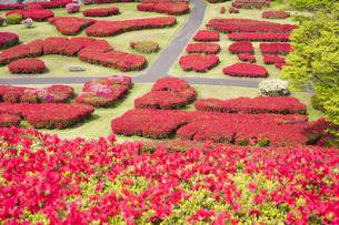 ツツジ咲く椎八重公園の写真素材 [FYI04836053]