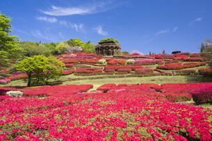ツツジ咲く椎八重公園の写真素材 [FYI04836054]