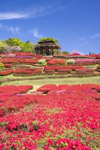 ツツジ咲く椎八重公園の写真素材 [FYI04836055]