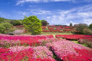 ツツジ咲く椎八重公園の写真素材 [FYI04836056]