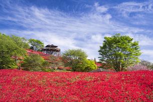 ツツジ咲く椎八重公園の写真素材 [FYI04836057]