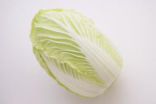 白菜の写真素材 [FYI04836137]
