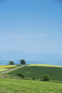 緑の畑作地帯と青空の写真素材 [FYI04836190]