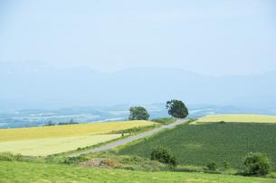 緑の畑作丘陵地帯と青空の写真素材 [FYI04836191]