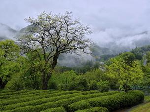 里山の風景の写真素材 [FYI04836275]