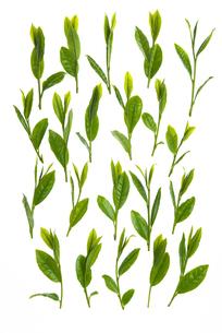 茶葉の写真素材 [FYI04836331]