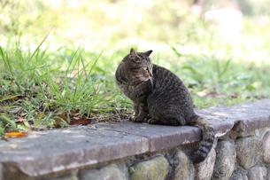 猫の写真素材 [FYI04836698]
