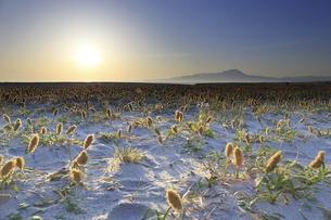 鳥取県の弓ヶ浜半島から伯耆大山の日の出の写真素材 [FYI04836798]